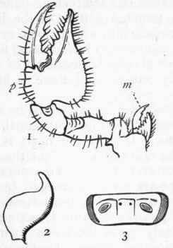 How To Draw Spiders likewise Chapter XXXV Arachnida further Ed1b additionally Index moreover 815163 Post6. on spider palps
