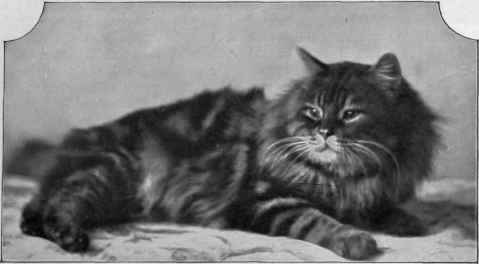 Chapter Xix Brown Tabby Persians