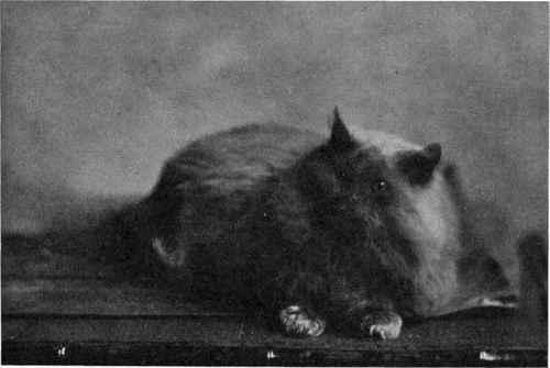Black Cat Ruddington