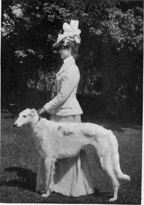 Chapter Xii The Borzoi Or Russian Wolfhound