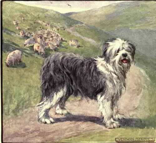 http://chestofbooks.com/animals/dogs/British-Dogs-Work/images/The-Old-English-Sheepdog.jpg
