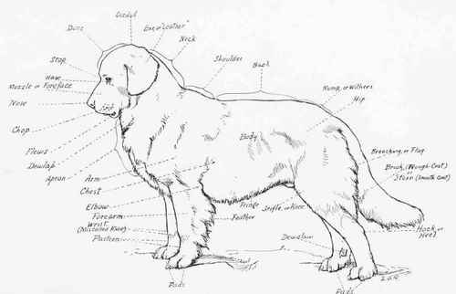 Newfoundland an outline chart of a dog using the newfoundland as a subject ccuart Image collections
