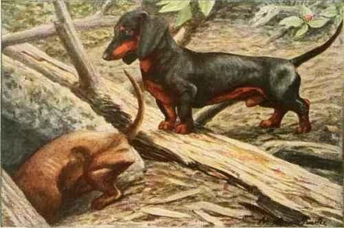 Από πού πήρε το όνομά του ο σκύλος dachsuhund...