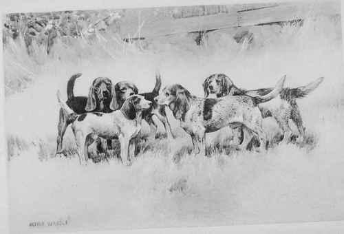 Πότε έγιναν γνωστοί οι σκύλοι μπιγκλ...