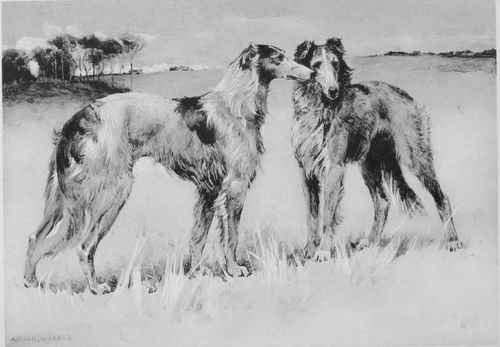 THE BORZOI OR RUSSIAN WOLFHOUND.