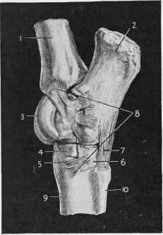 The Posterior Ligament