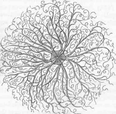 download brain tumor pathology current