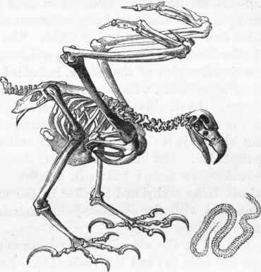 I would like to see shots of  Eagle Leg Anatomy