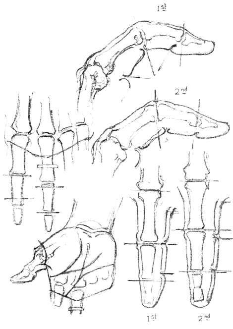 The Fingers, Anatomy, Masses, Movements, Fingers. Creases