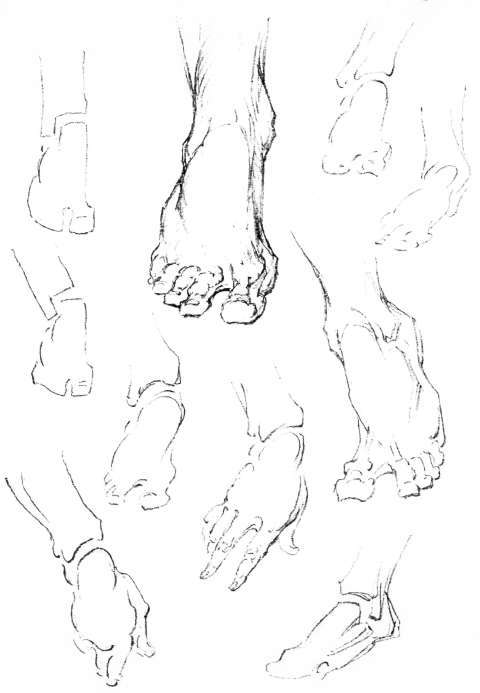 Foot Side View Drawing Movements-constructiveanatomy