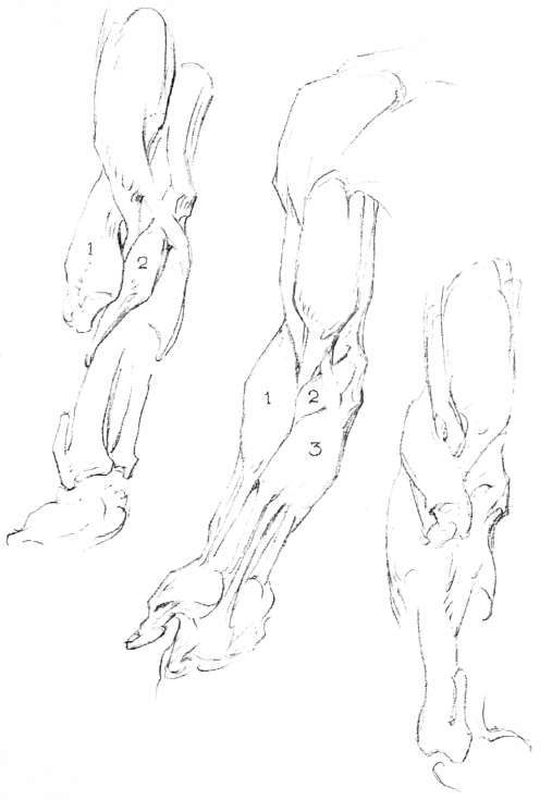 The Forearm, Anatomy And Movements, Masses, The Arm, Anatomy