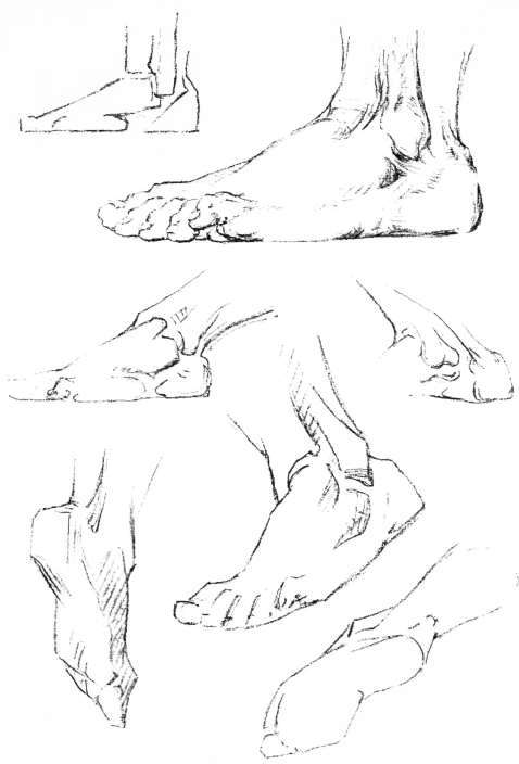 Foot Side View Drawing The Foot Outer View