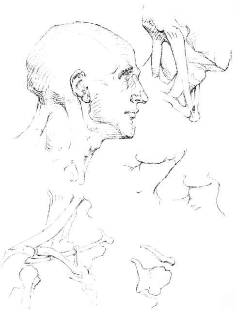 The Armpit, The Neck, Movements Of The Neck