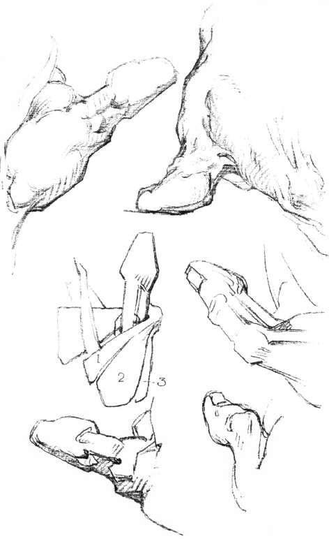 The Hand Construction The Thumb Anatomy Masses Movements