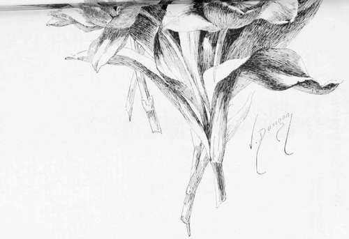 No 8 tulips pen drawing by victor dangon