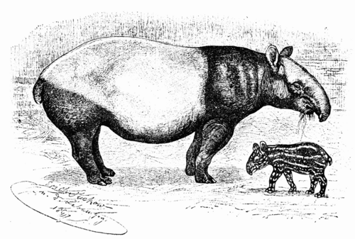 Free coloring pages for Tapir coloring page