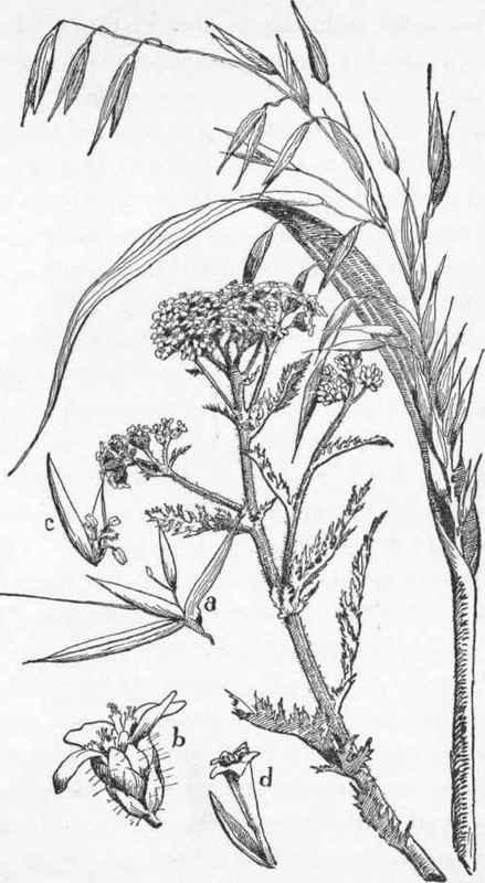 Grasses Part 3
