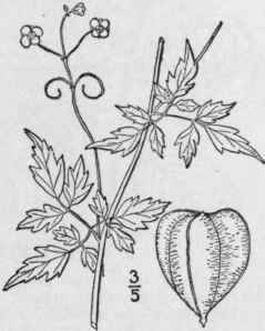 4161 furthermore 1023 likewise View plant additionally Grape leaves drawings additionally 2249. on shade plants and flowers
