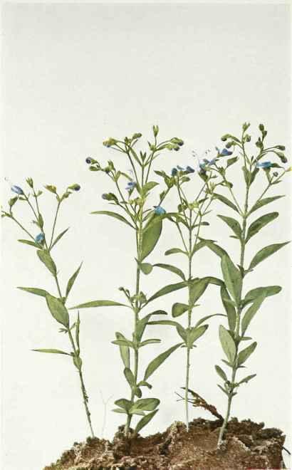 痞客邦 PIXNET野蔓園香草 Yamana Garden Herbs