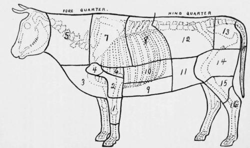 Beef Cut Anatomy Cow Parts Diagram Beef Cuts