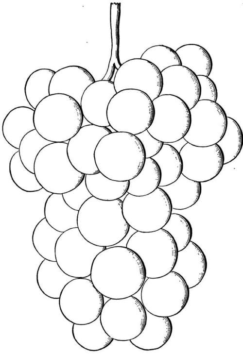 Bunch Of Grapes Coloring Pages