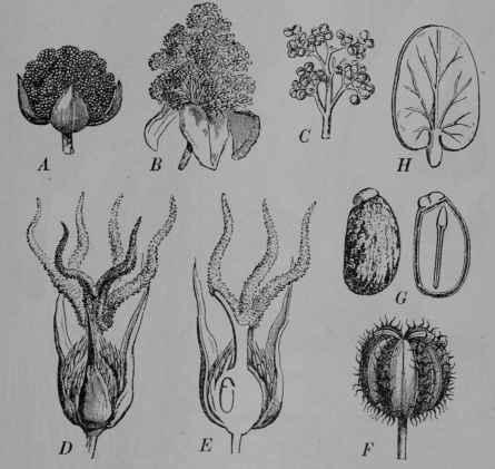 Part Ii More Fruit Of Poisonous Tree >> Part 60. Non-Poisonous Drugs. Part 3