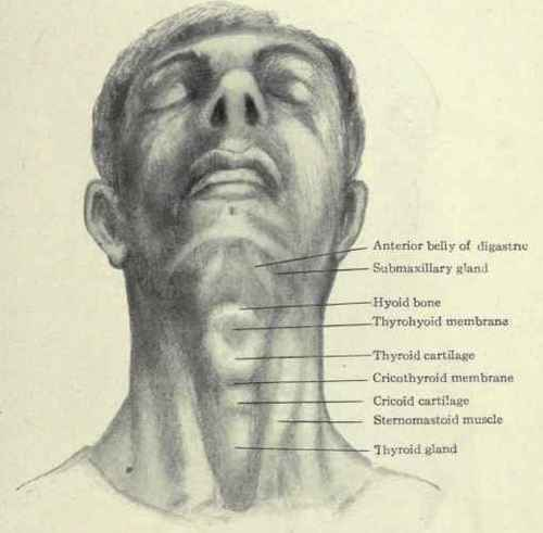 Surface Anatomy Of The Neck