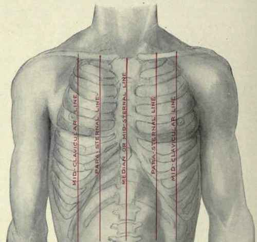The Chest Contents The Longitudinal Lines