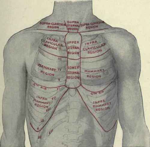 The regions of the chest the anterior regions of the chest ccuart Gallery