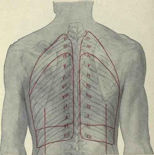 Lung Anatomy Diagram Posterior - Schematics Wiring Diagrams •