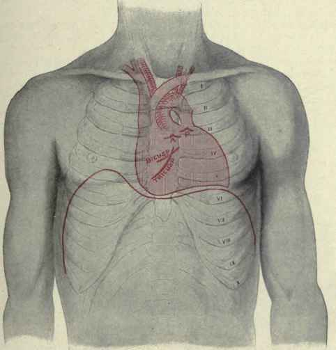Outlines Of The Heart