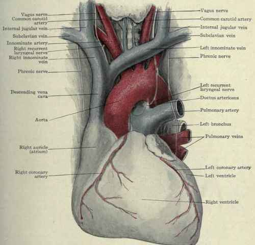Anatomy Of A Great Picture: The Aorta. Part 2