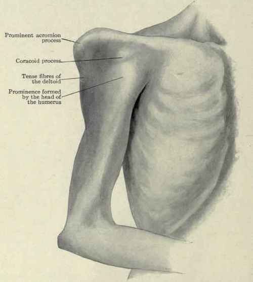 essay on glenohumeral joint
