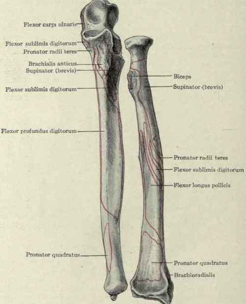 Head Of Ulna