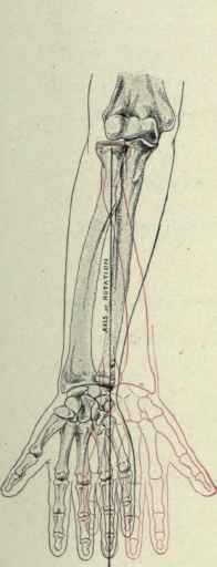 Movements Of Pronation And Supination