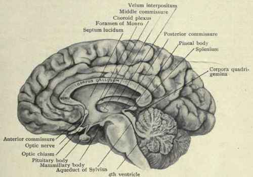 The Circulation Of The Brain Part 2