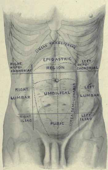 Surface Anatomy Of The Abdomen Continued
