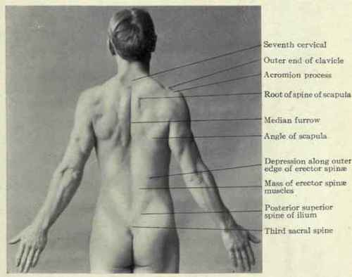The Back And Spine. Surface Anatomy