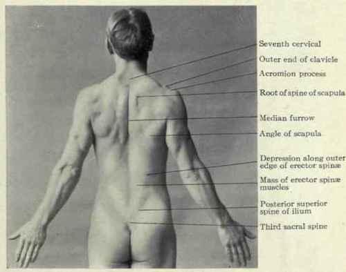 The human back