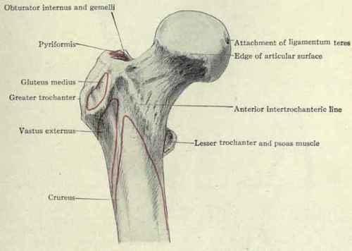 Region Of The Hip