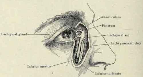 Drawn By Mr. Louis Schmidt. Part 3 Inferior Meatus Puncture
