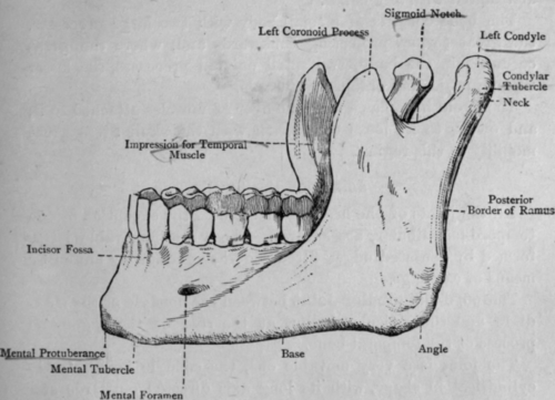Image Gallery Maxilla Inferior