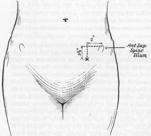 Anatomy Part 2