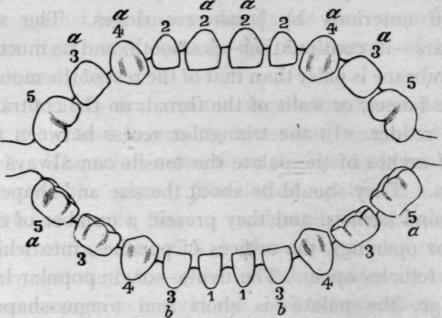 15 dentition diagram showing eruption of milk teeth ccuart Gallery