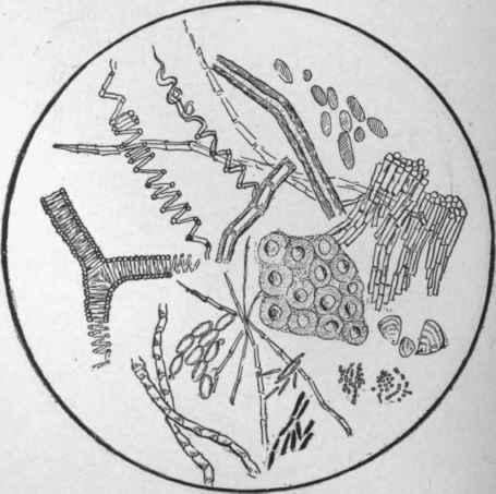 stool microscopic examination images pdf