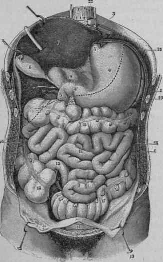 Anatomy large bowel