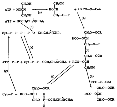 buy The Sulphonium Group: Volume 2 (1981) 1981