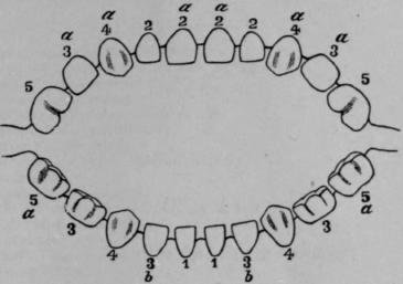 Eruption of the teeth temporary teeth eruption of the teeth temporary teeth 1509 ccuart Image collections