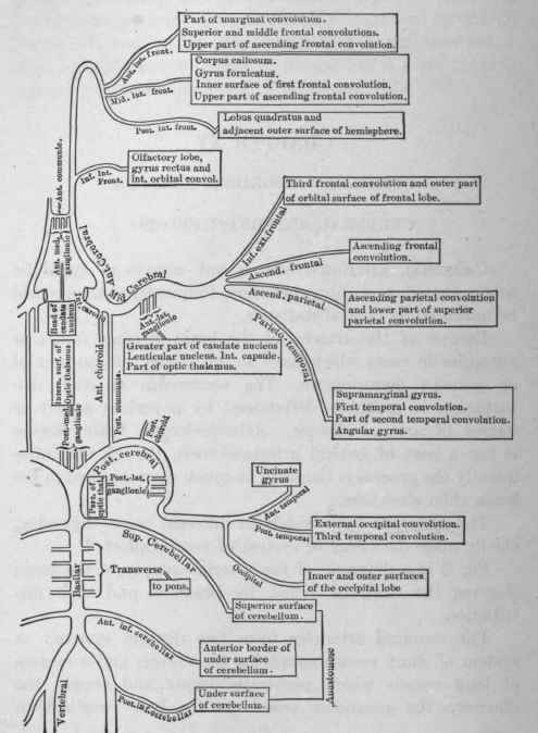 Chapter XV. Syphilitic Disorders. Cerebral Arteriosclerosis