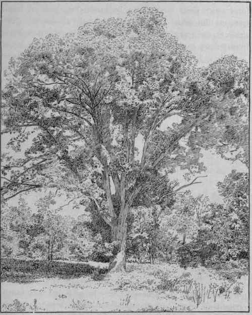 256 Classification Of Trees